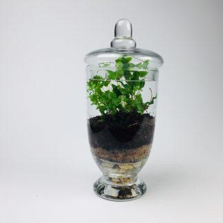 'Companion' living terrarium(Companion-002 / 9 x 20 cm)