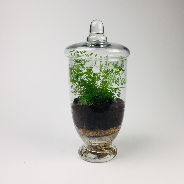 'Companion' living terrarium(Companion-003 / 9 x 20 cm)