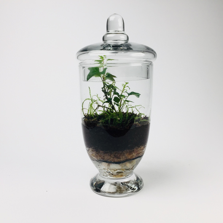 'Companion' living terrarium(Companion-004 / 9 x 20 cm)