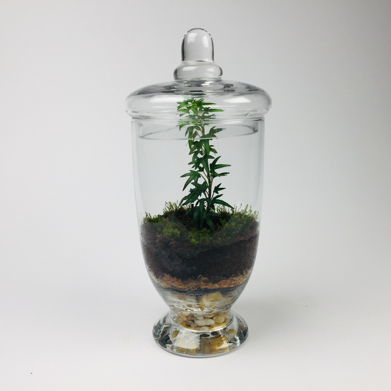 'Companion' living terrarium(Companion-006 / 9 x 20 cm)