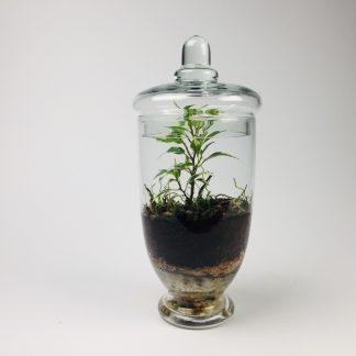 'Companion' living terrarium(Companion-010 / 9 x 20 cm)