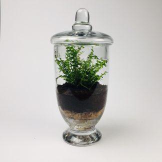 'Companion' living terrarium(Companion-011 / 9 x 20 cm)