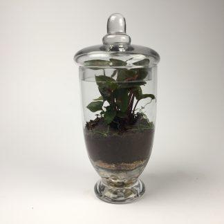 'Companion' living terrarium(Companion-012 / 9 x 20 cm)