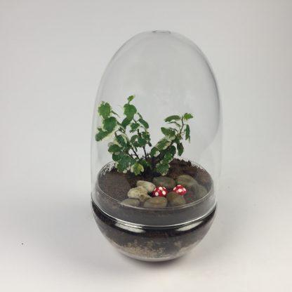 'Eggdom' living terrarium(9 x 17 cm / Eggdom-001)
