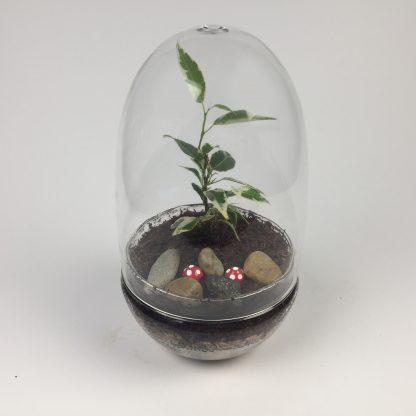 'Eggdom' living terrarium(9 x 17 cm / Eggdom-003)