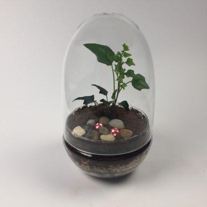 'Eggdom' living terrarium(9 x 17 cm / Eggdom-004)