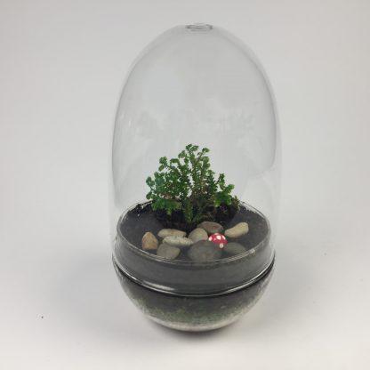 'Eggdom' living terrarium(9 x 17 cm / Eggdom-006)