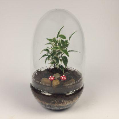 'Eggdom' living terrarium(9 x 17 cm / Eggdom-009)