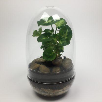 Egg terrarium