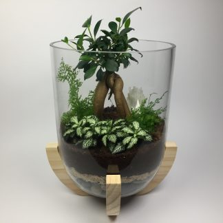 """Paradise"" large open terrarium with wooden base, fig tree and natural crystal gemstone"