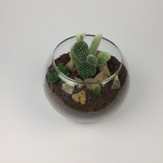 Cactus terrarium (T076)