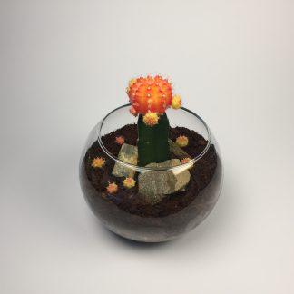 T30 Cactus Terrarium 11cm (h) x 15cm (w)