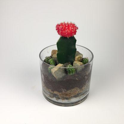 T31 Cactus Terrarium 11cm (h) x 15cm (w)
