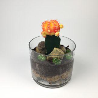 T32 Cactus Terrarium 11cm (h) x 15cm (w)
