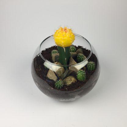 T33 Cactus Terrarium 11cm (h) x 15cm (w)