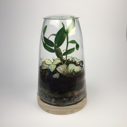 """BlueJay"" Tapered cylindrical living terrarium with wooden base and natural gemstone."