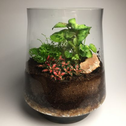 """Annebelle"" - great looking terrarium"