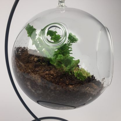Hanging air plant living terrarium