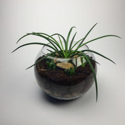 Cactus terrarium (T075)
