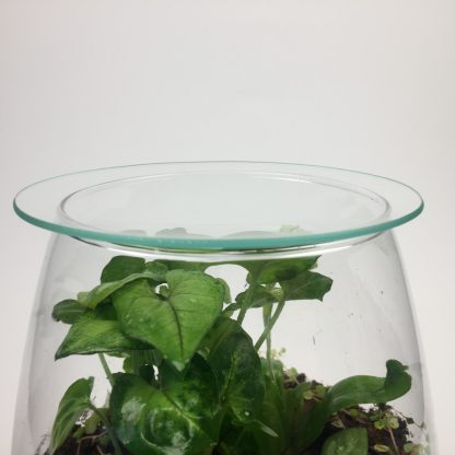 Closed living terrarium - medium sized (T077)