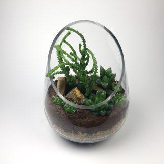 Cactus terrarium (T079)