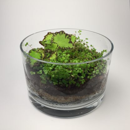 Medium open terrarium