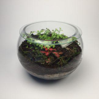 'Melody' small closed living terrarium (T081)