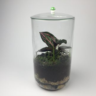 Small closed living terrarium (T082)