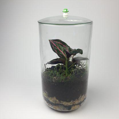 Small closed living terrarium (T082)